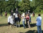 Pferde_001