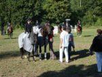 Pferde_002